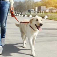 Nevestni lastniki psov in pasji iztrebki